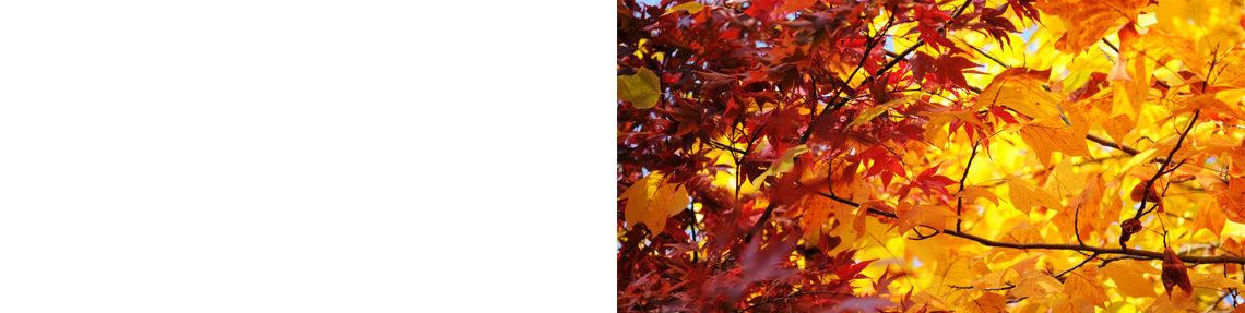 Herbstanlass: Dampfzentrum Winterthur